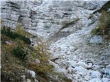 Dolina Kot - macesnovec