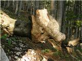 Rutarski gozd - Rodica